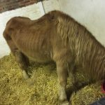 Horses Left for Three Months with No Food or Water Rescued by Horse Charity