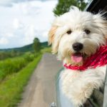 7 Tips to Make Your Dog Comfortable While You Travel by Car