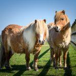 Remus Horse Sanctuary Concerns for Animals