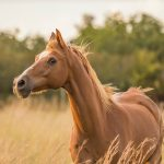 Top tips to training your horse