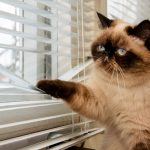 What To Know When Searching For Blinds That Suit Your Needs