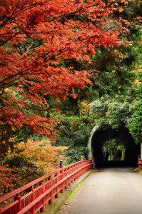 Autumn_foliage_2012_(8253653780)