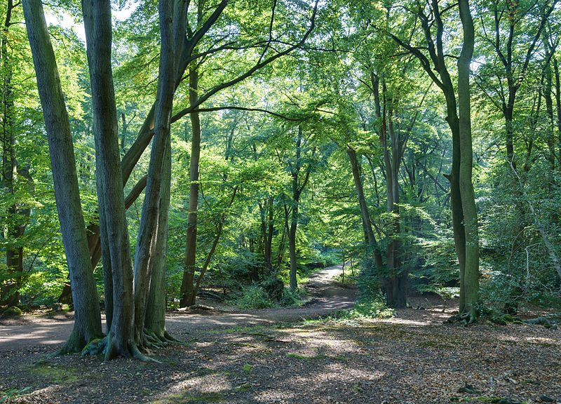 800px-epping_forest_centenary_walk_2_-_sept_2008