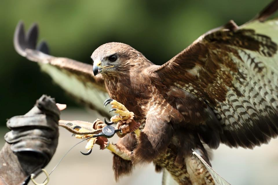 The Imperial Bird of Prey Academy