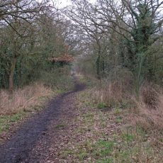 Maldon Wick Nature Reserve