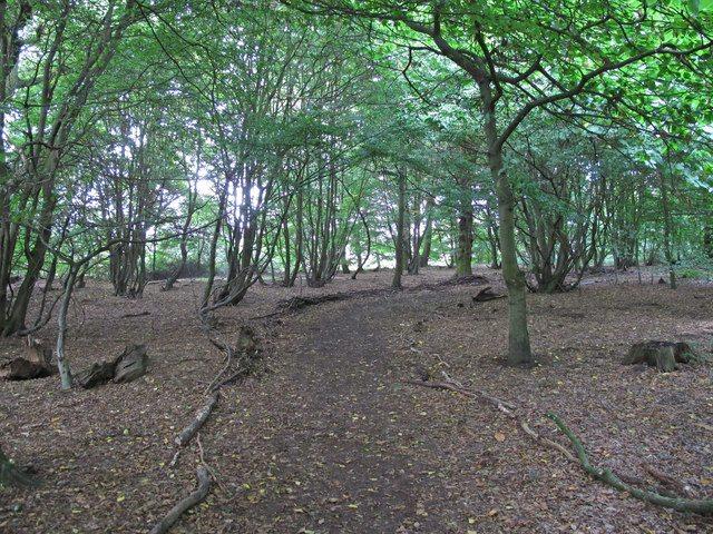 Danbury Ridge Nature Reserves