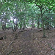Crowsheath Wood Nature Reserve