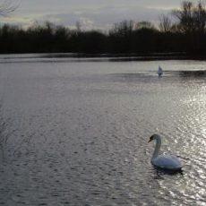 Chigborough Lakes Nature Reserve
