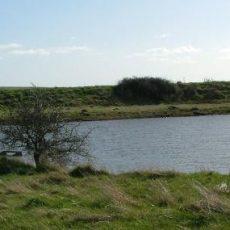 Fobbing Marsh Nature Reserve