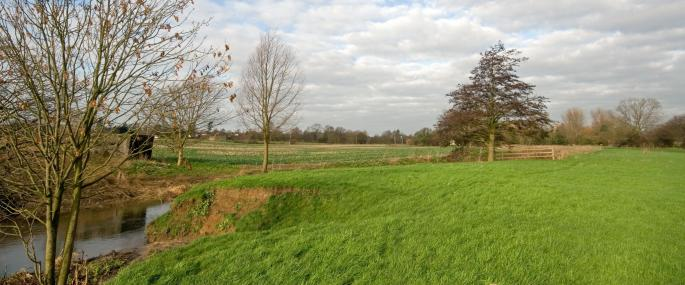 Little Waltham Meadows Nature Reserve