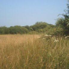John Weston Nature Reserve
