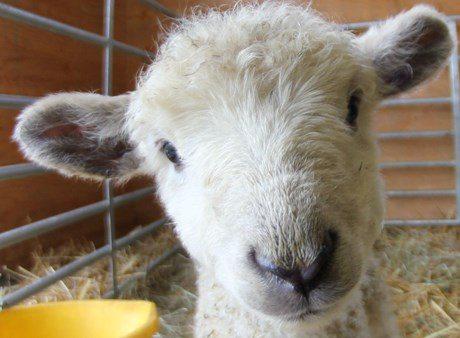 Hadleigh Farm Rare Breeds Centre