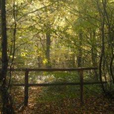 Little Haven Nature Reserve