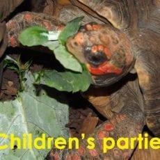 childrens Reptile Parties Essex