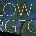 Harlow Tree Surgeons