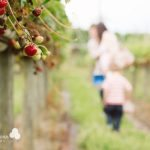 Pick Your Own: Spencer's Fruit Farm