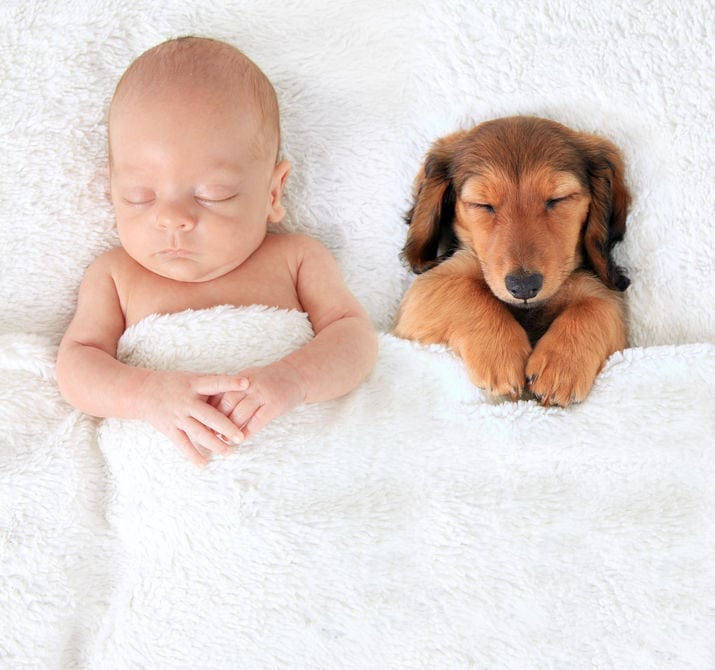 Blended Families: How To Introduce Pets And Get Them Settled Into Their New Environment