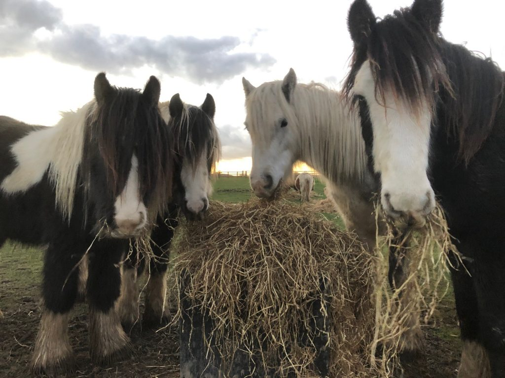 Buy a Bale of Hay to Support Charity