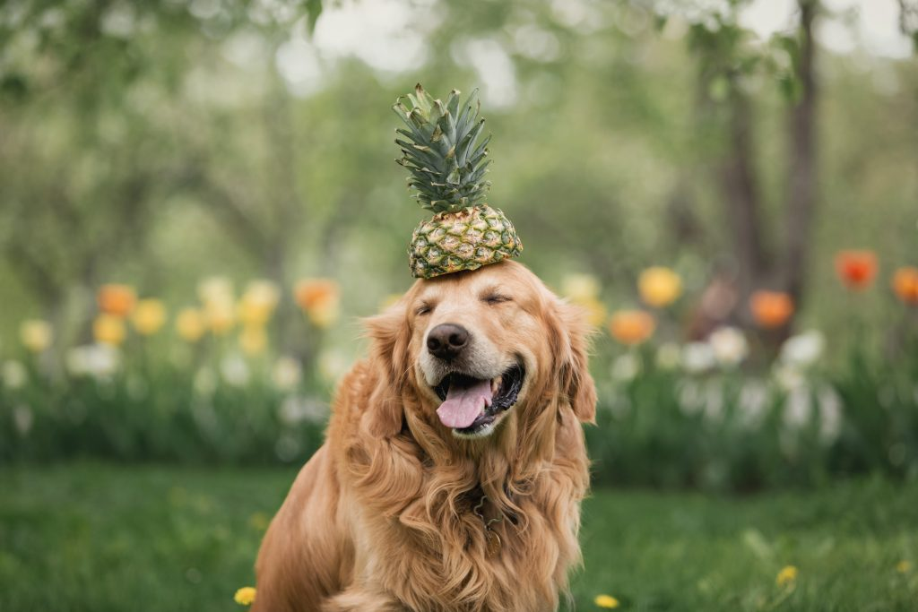 9 Reasons Why Pineapple Is Good For Your Dog